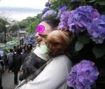 2008_0620駒沢江ノ島長谷由比ガ浜駒沢0104