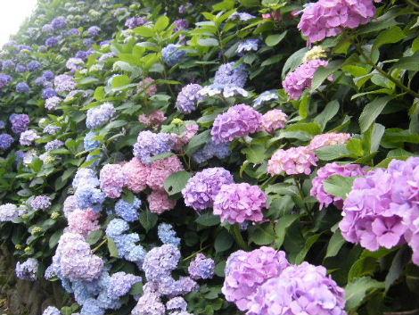 2008_0620駒沢江ノ島長谷由比ガ浜駒沢0109