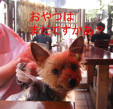 2008_0702吉祥寺0006