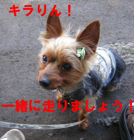 2008_0702吉祥寺0018