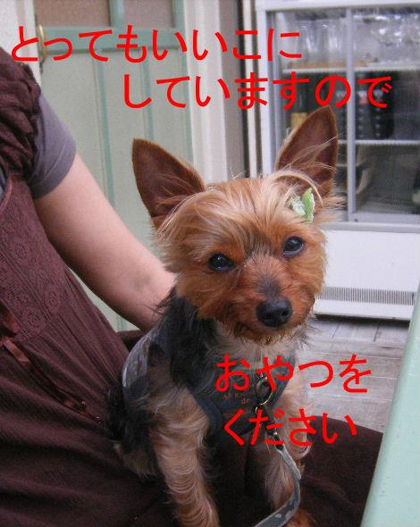 2008_0702吉祥寺0025