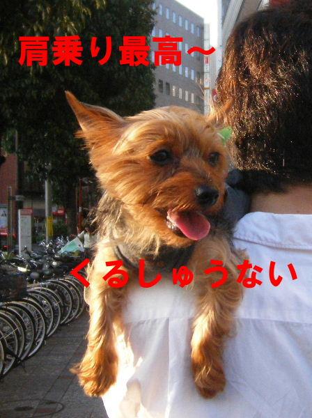2008_0702吉祥寺0033
