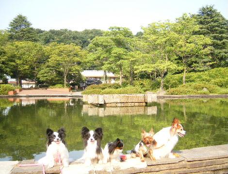2008_0706銀座青山溝口生田兵庫島駒沢三宿0028