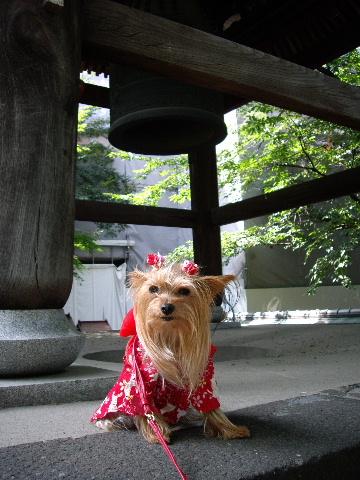 2008_0720麻布十番六本木乃木坂青山0015
