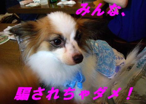 2008_0807中目黒0006