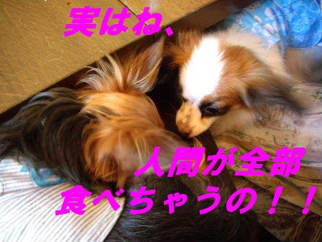 2008_0807中目黒0008