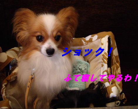 2008_0807中目黒0011