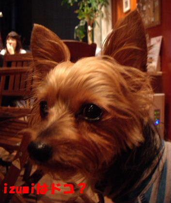 2008_0927Havet看板犬0023