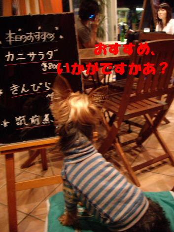 2008_0927Havet看板犬0025