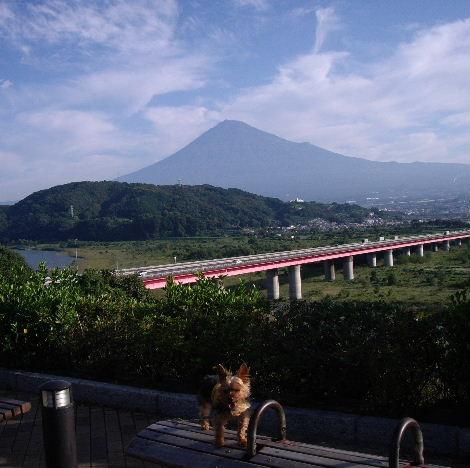 2008_1012大阪秋の陣0002