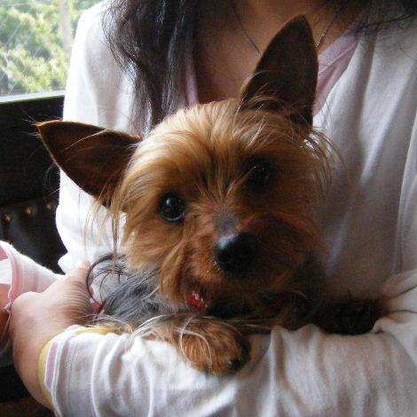 2008_0428komazawa0007.jpg