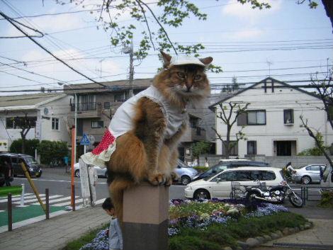 2008_0429mishuku4.jpg