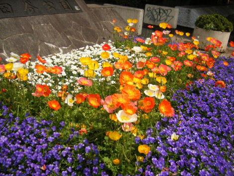 2008_0429mishuku5.jpg
