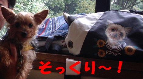 2008_1005komazawa0046.jpg