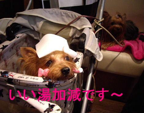 2008_1005komazawa0051.jpg