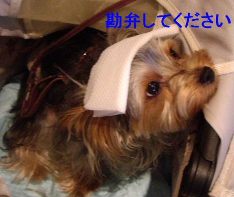 2008_1005komazawa0052.jpg