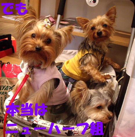 2008_1005komazawa0103.jpg