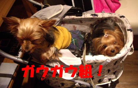 2008_1005komazawa0104.jpg