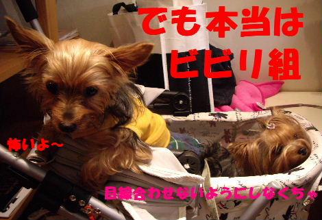 2008_1005komazawa0110.jpg