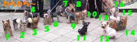 2008_1005komazawa0118.jpg