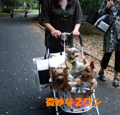 2008_1005komazawa0126.jpg