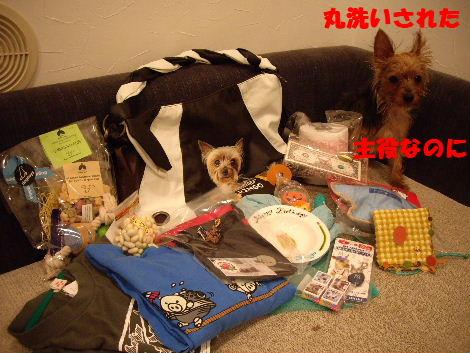 2008_1005komazawa0128.jpg