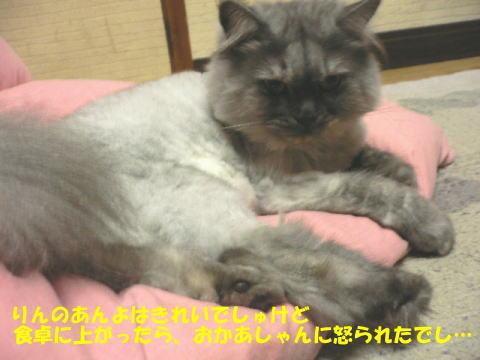 rin114_1.jpg