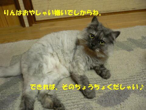 rin120_1.jpg