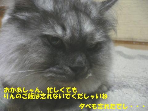rin124_1.jpg