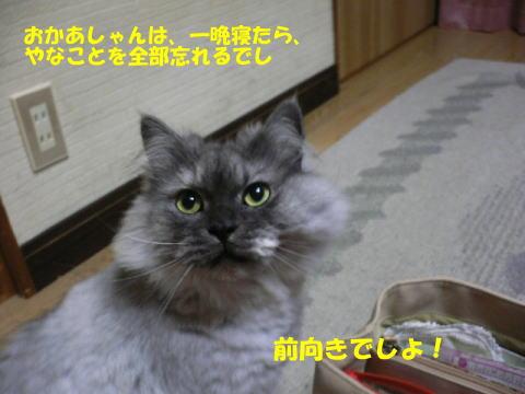 rin127_1.jpg