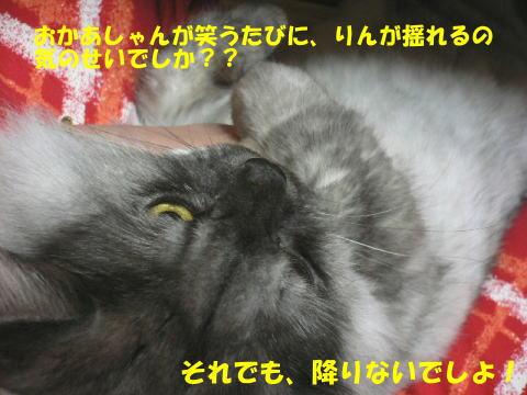 rin129_1.jpg
