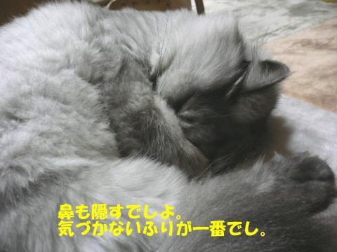 rin130_1.jpg