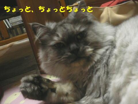 rin136_1.jpg
