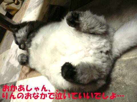 rin141_1.jpg