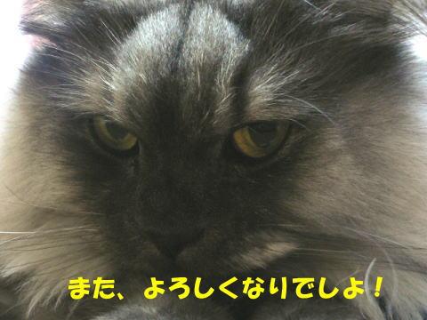 rin149_1.jpg