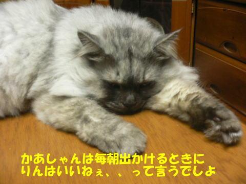 rin159_1.jpg
