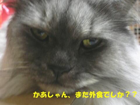 rin168_1.jpg