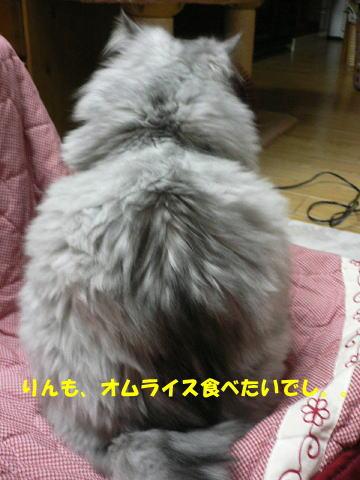 rin190_1.jpg