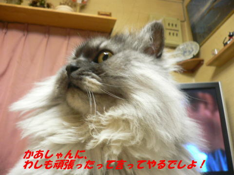 rin191_1.jpg