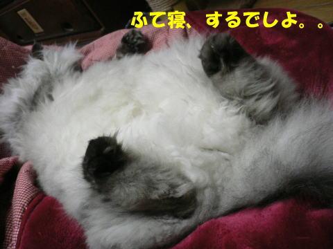 rin201_1.jpg