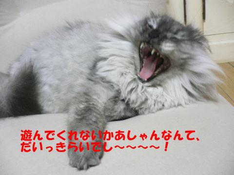 rin205_1.jpg