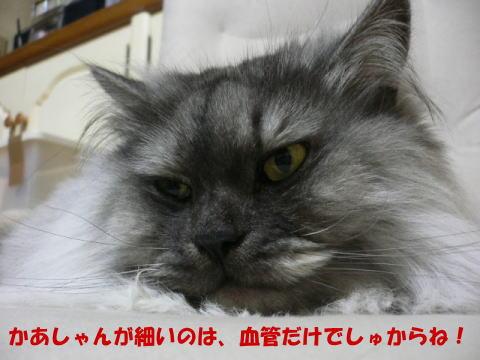 rin207_1.jpg