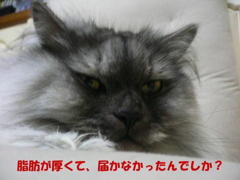 rin208_1.jpg