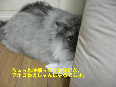 rin210_1.jpg