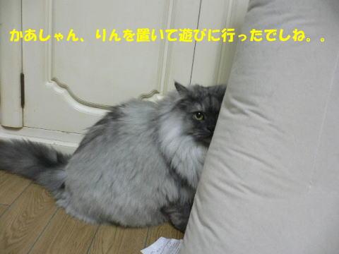 rin211_1.jpg