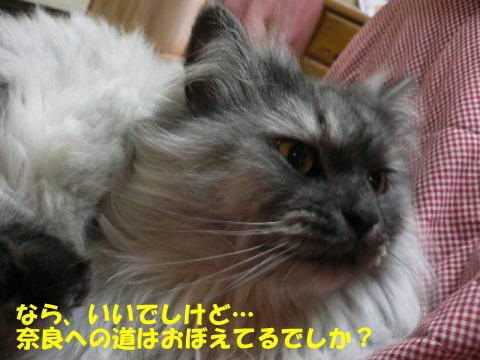 rin212_1.jpg