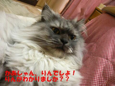 rin214_1.jpg
