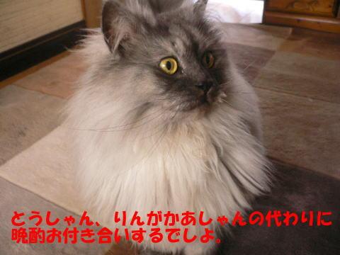 rin269_1.jpg