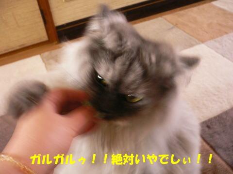 rin289_1.jpg