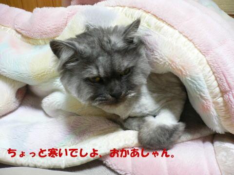 rin298_1.jpg